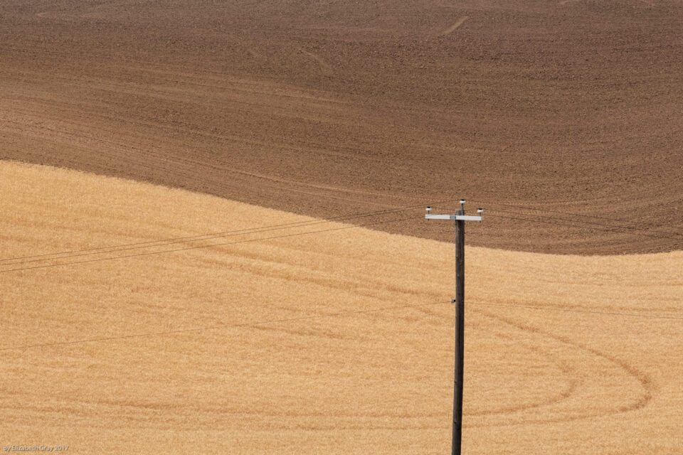 Pole in Field