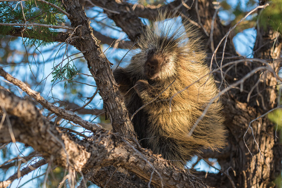 04-Porcupine in Tree