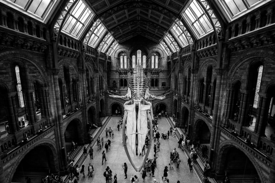 Hintze Hall in London Natural History Museum