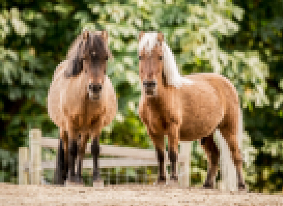 A blurred image of horses demonstrating DPI vs PPI