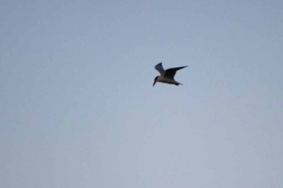 Out of Focus Bird in Flight Photograph