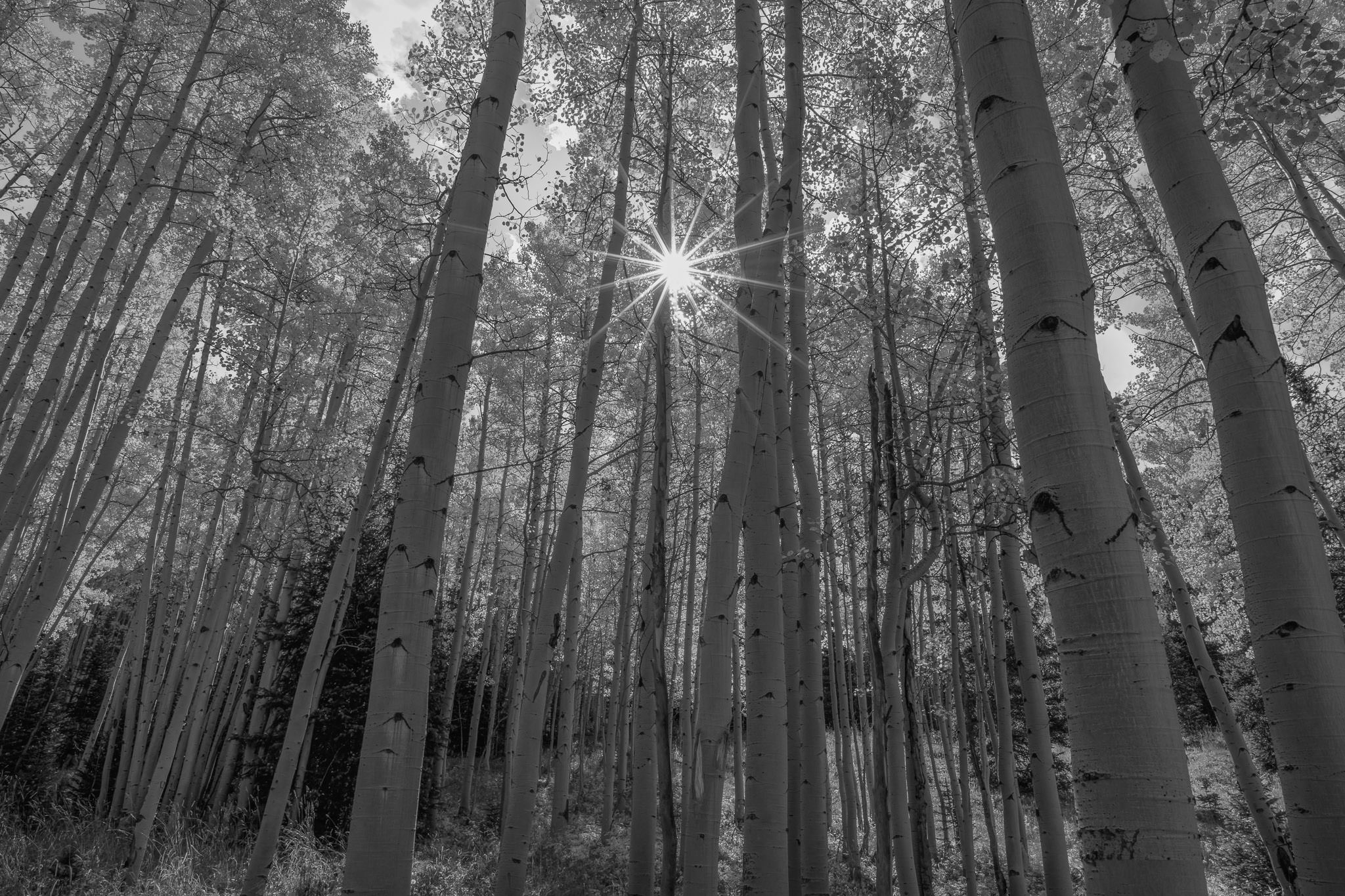 Dark aspens photo nikon d800e 20mm f 1 8 20mm iso 100 1 30