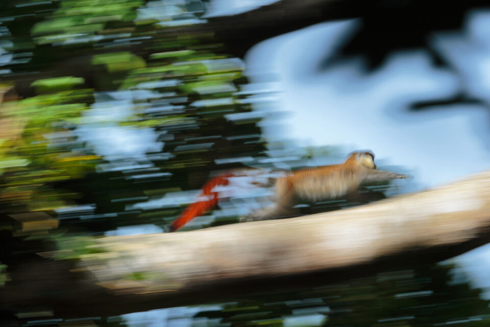 Panning Wildlife Example