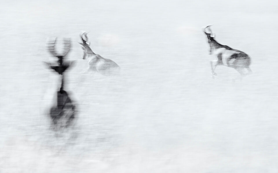 Wildlife Photography Motion Blur