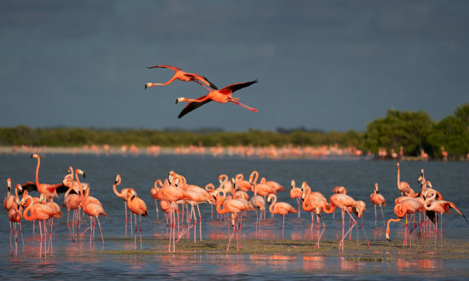 3. American Flamingo, Mexico
