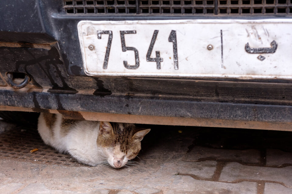 Cats of Morocco #2