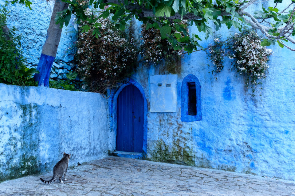 Cats of Morocco #3