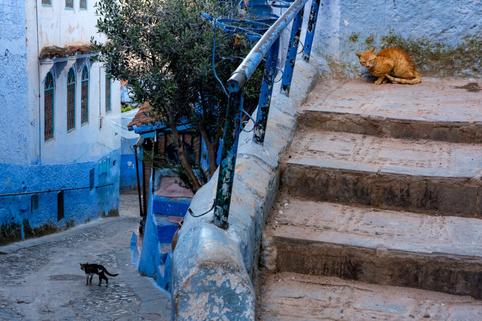 Cats of Morocco #4