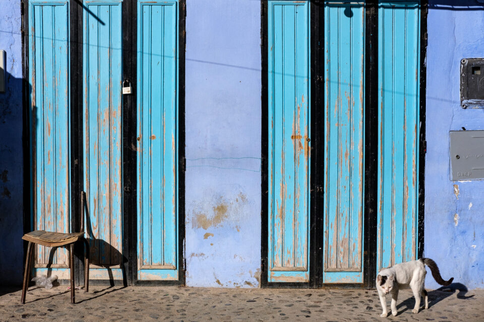 Cats of Morocco #5