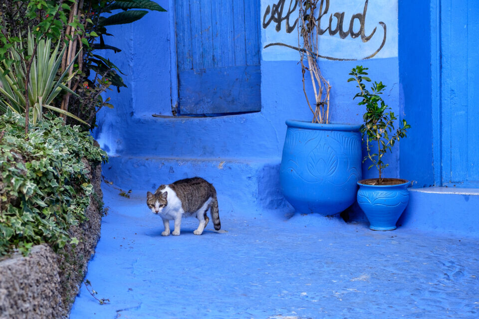 Cats of Morocco #6