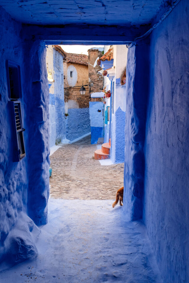 Cats of Morocco #7