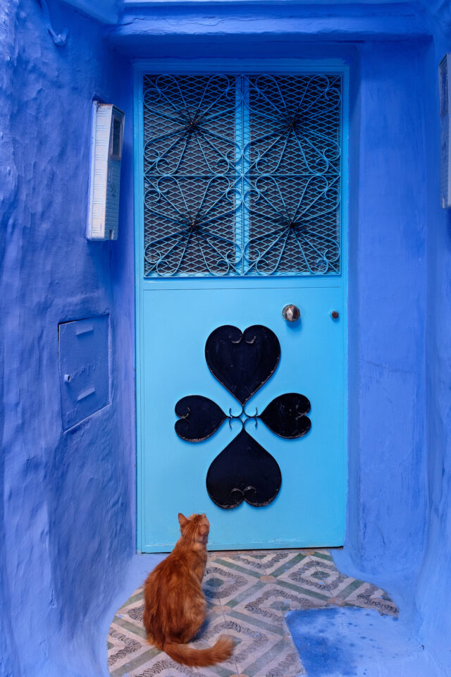 Cats of Morocco #8