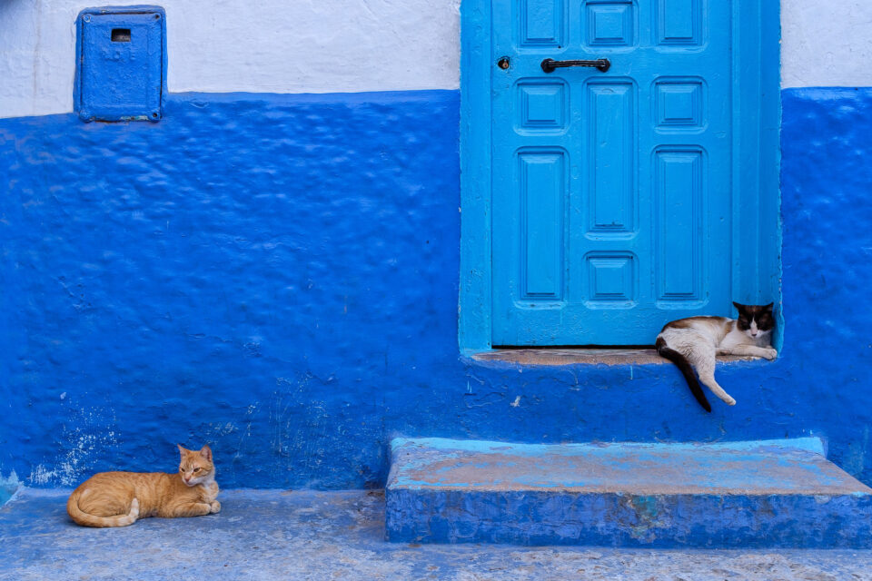 Cats of Morocco #9