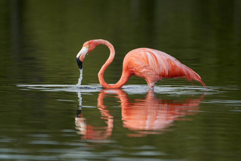 Flamingo Sample Photo