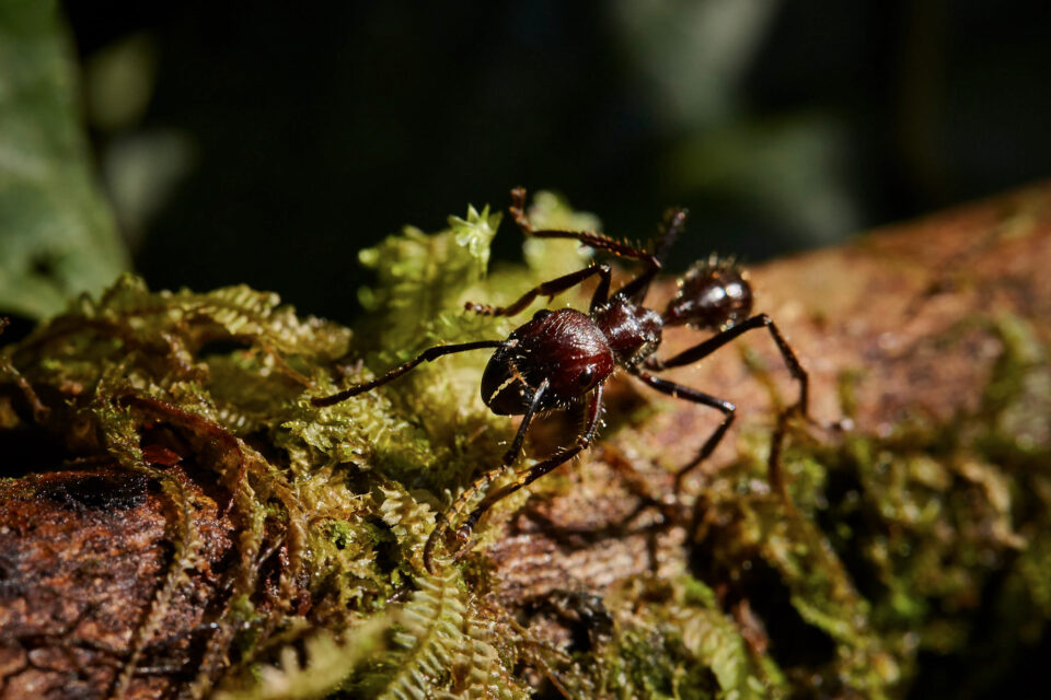 Macro Sample Photo of Ant