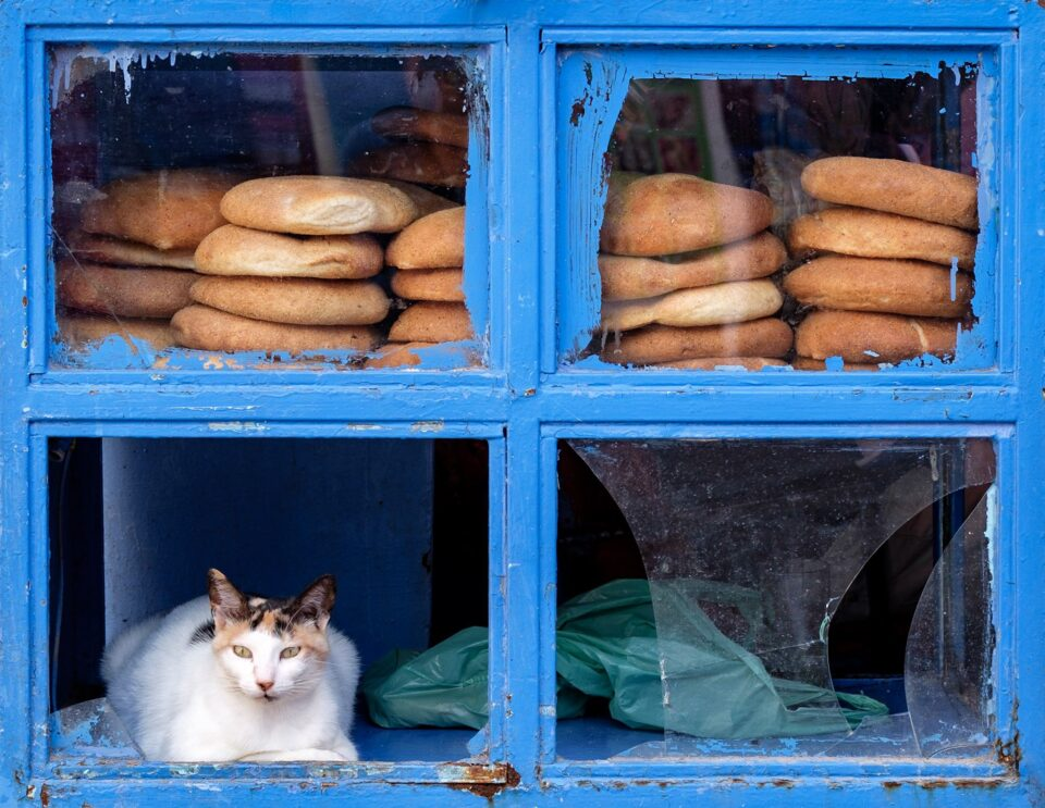Cat in Chefchaouen