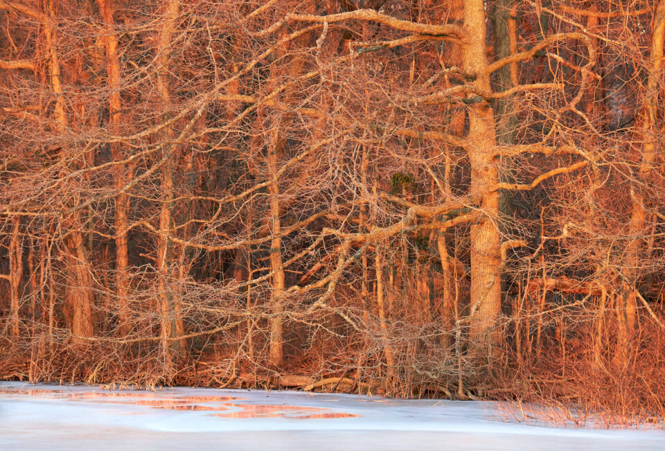 Red Forest and Ice Reflection 1