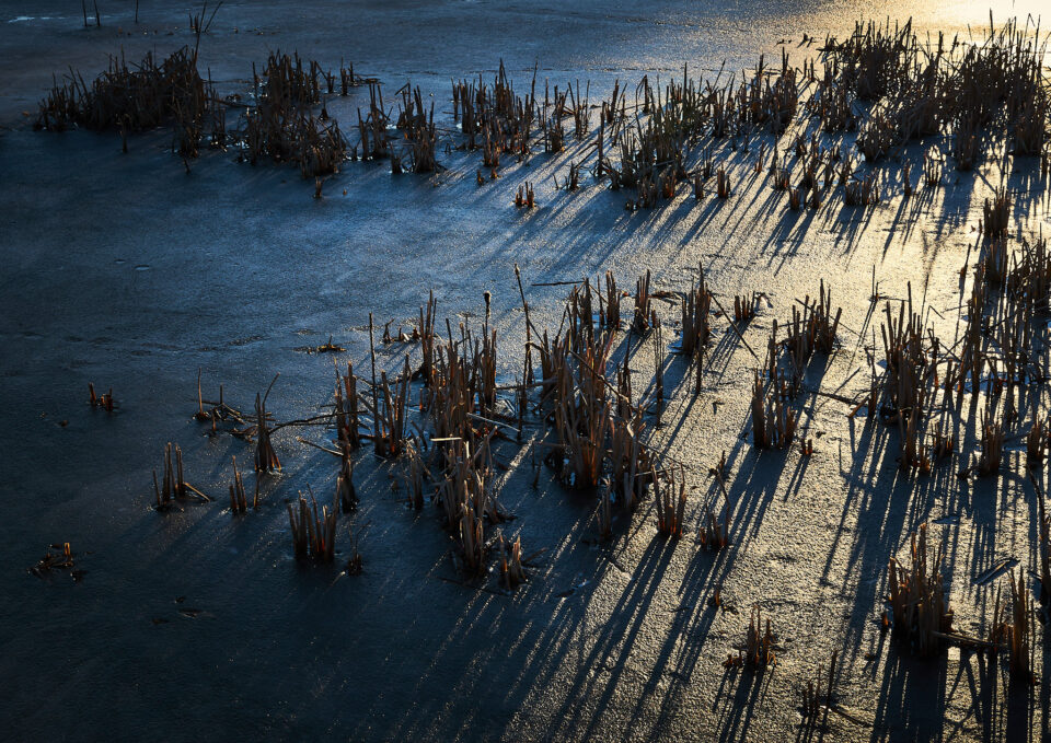 Icy Reeds at Sunset