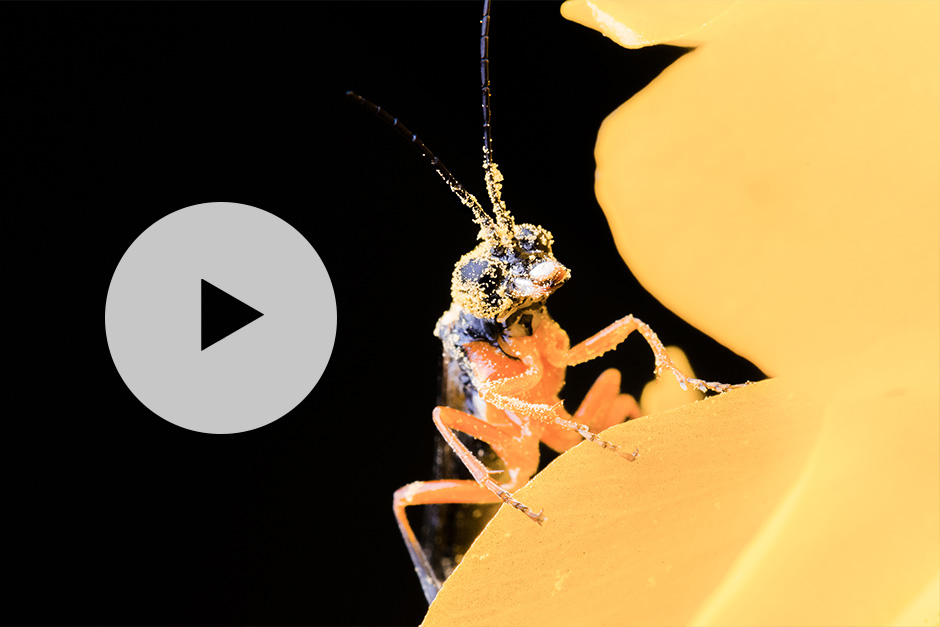 Our Macro Photography Video on YouTube