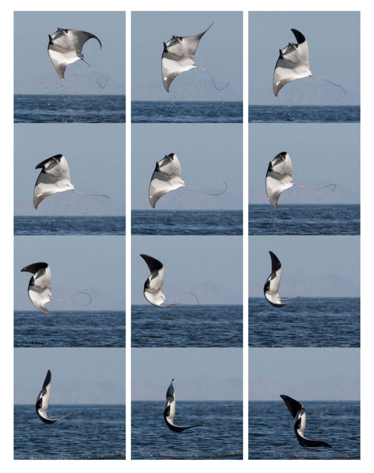 Devil Ray Jump Composite