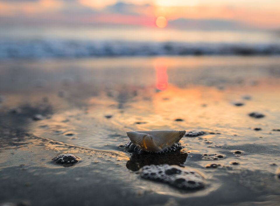 Nikon D7000 Ocean Shell Sunrise