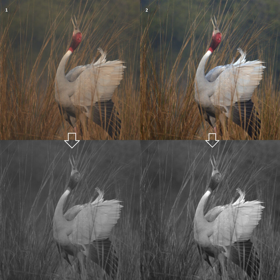 Color correction is the first step in black and white conversion