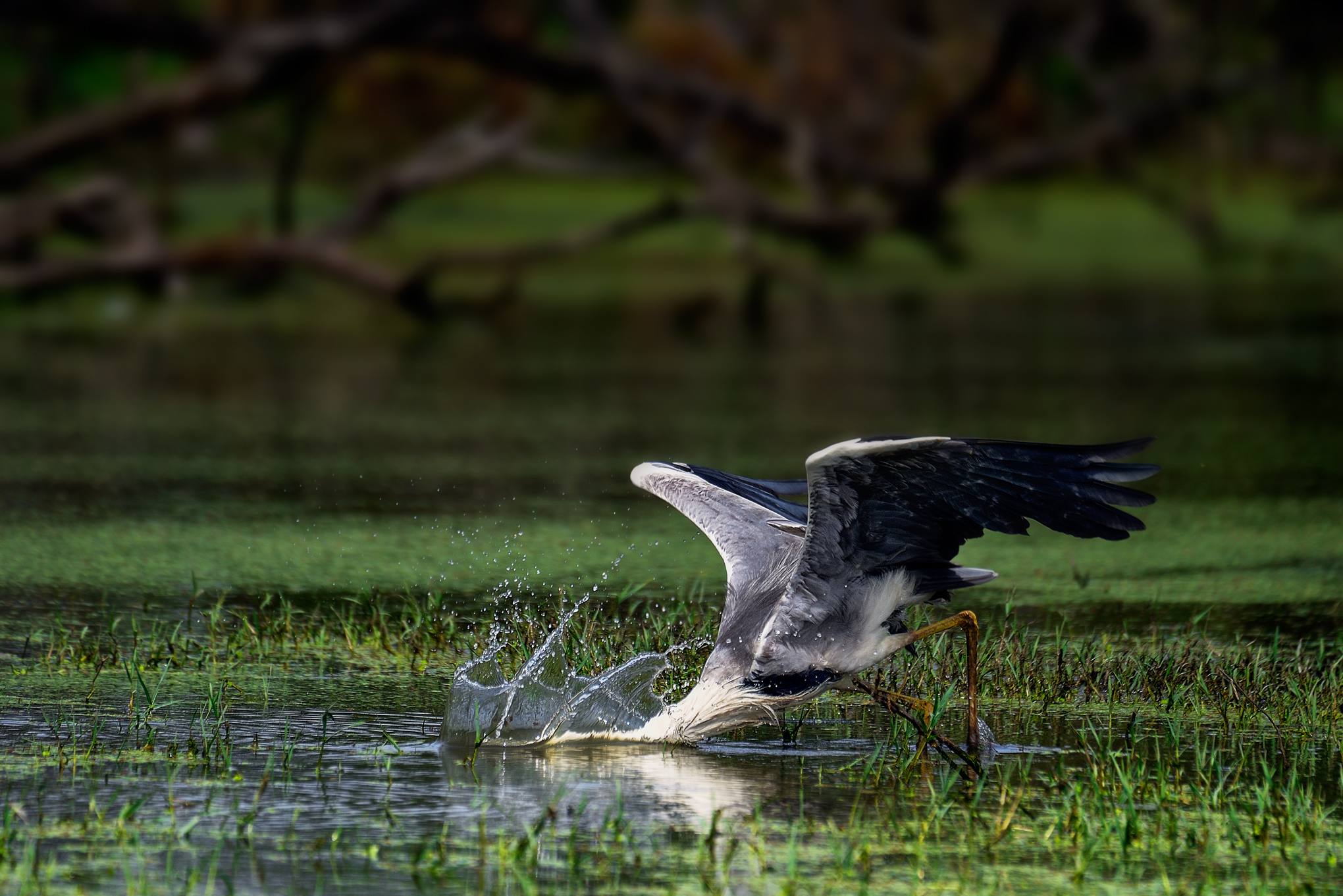 20 Tips for Bird Photography