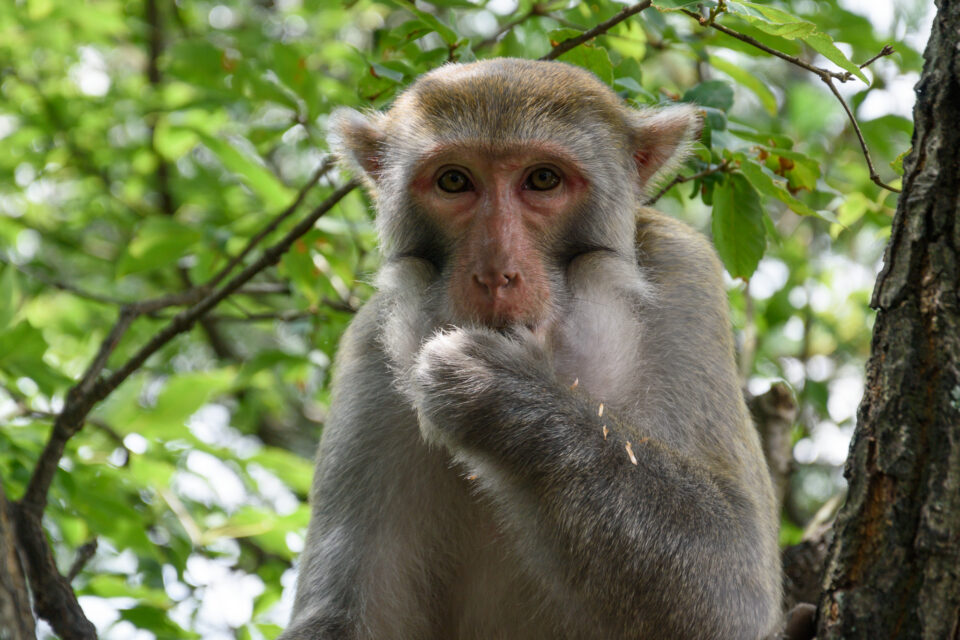 This monkey is doing the 'speak no evil' pose in Zhangjiajie, China. Taken with the Nikon D3500 DSLR.