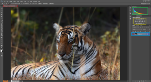 A Beginner's Guide to Adobe Photoshop