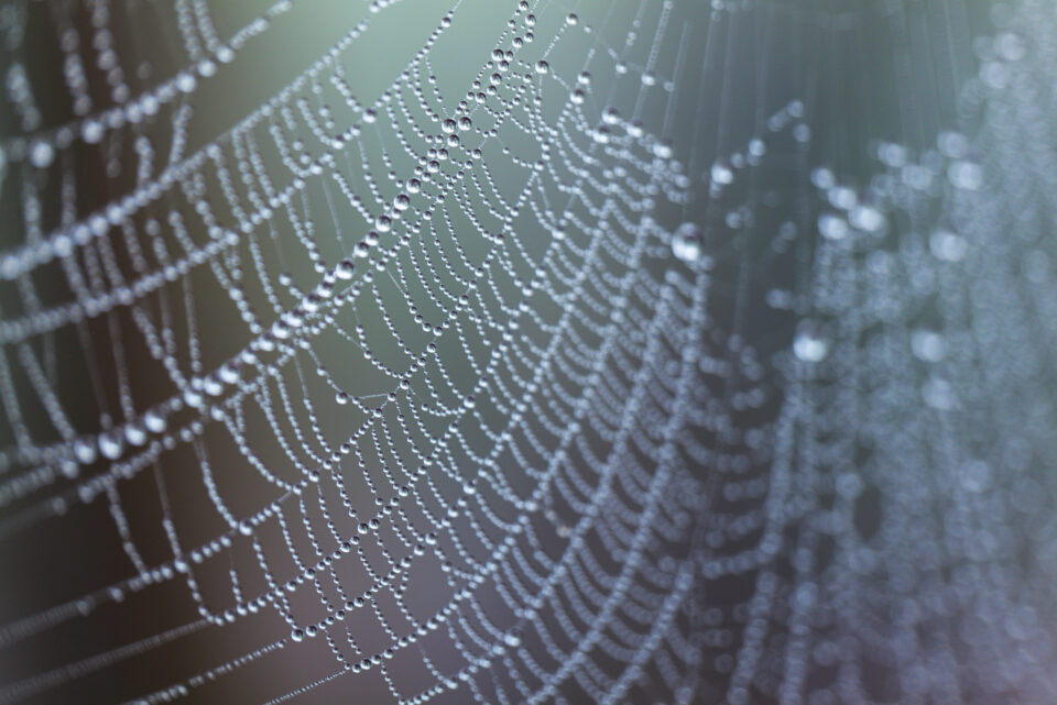 An image of a spider web, captured in aperture priority mode