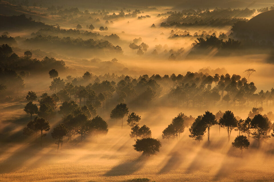 Trees, Light, Mist – Central Shan State