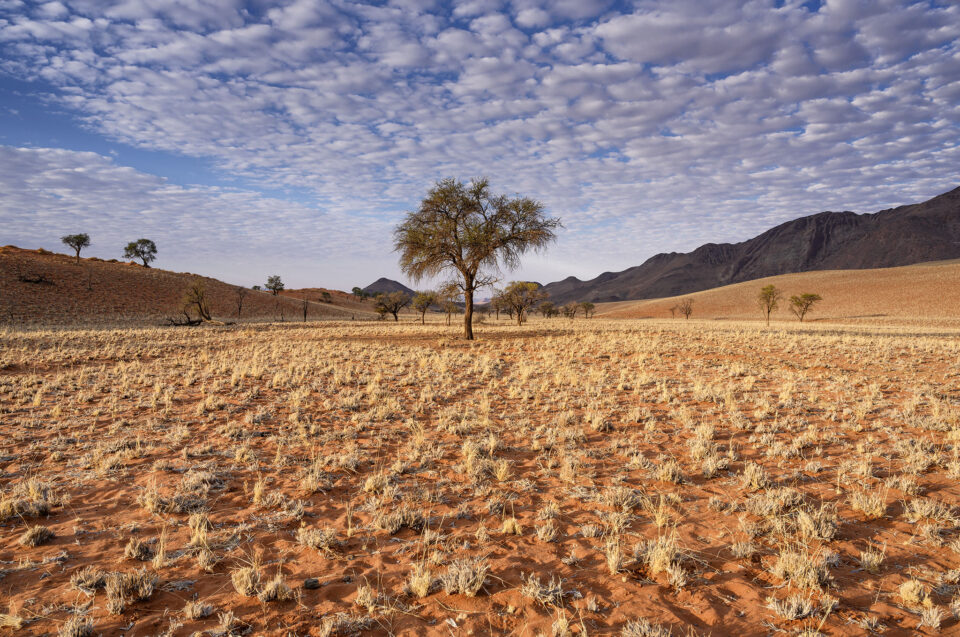 A lone tree in Namibia