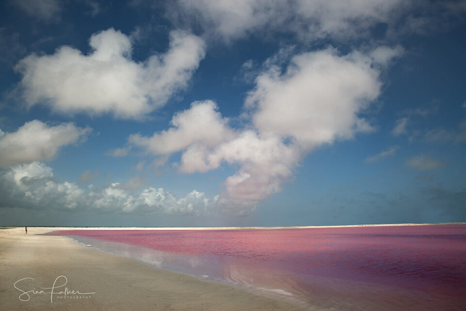 Pink Lagoons – Las Coloradas, Mexico