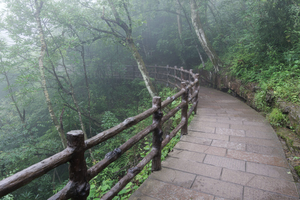 A stone walkway winds through a misty forest in China's Zhangjiajie National Forest Park.
