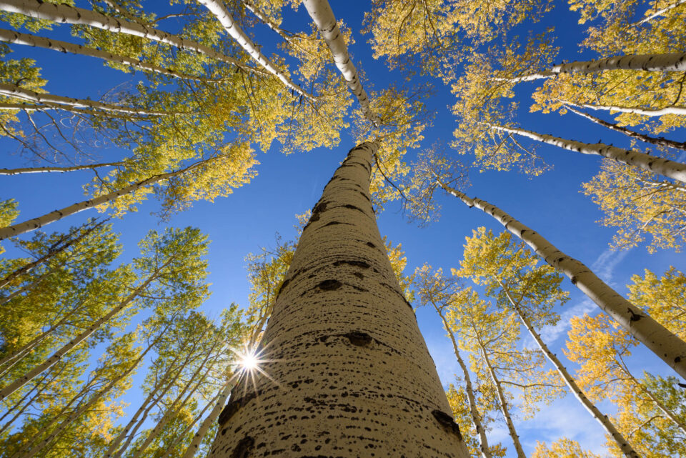 I took this photo of aspen trees using the Tamron 15-30mm f/2.8 lens for Nikon.
