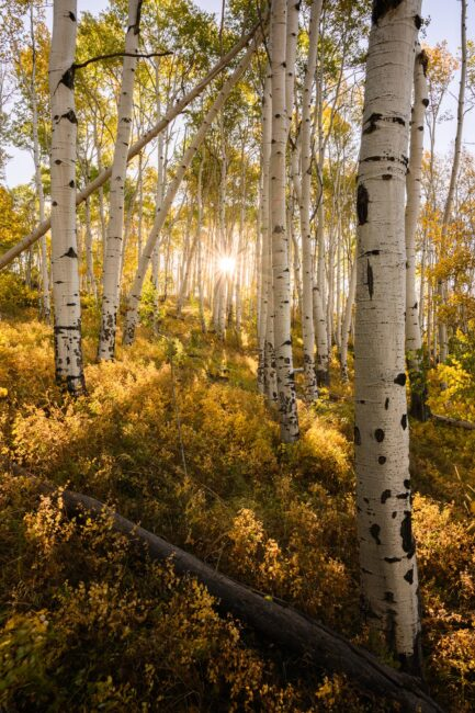 I took this photo of backlit aspen trees in Colorado using the sharp, lightweight Nikon 24-70mm f/4 S.