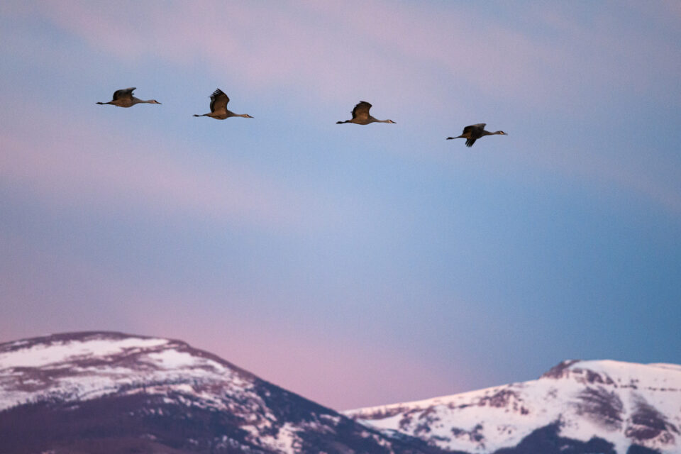 Animals tend to migrate during the winter months. If you live in an area near the migration, you can capture some amazing wildlife photos.