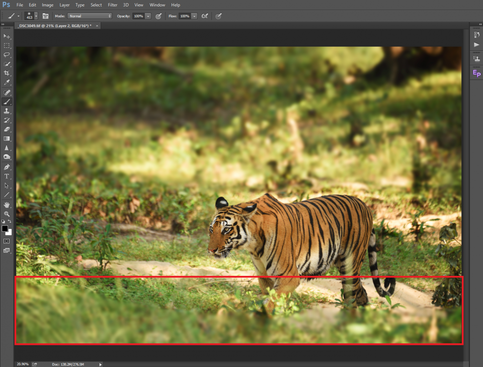 Tiger foreground
